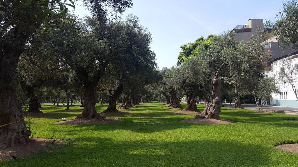 parque el olivar en san isidro